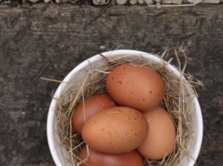 ביצי חופש אורגניות